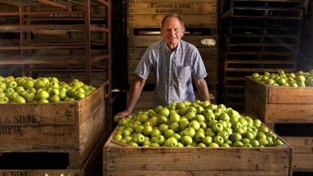 Barry Aumann with his crates of picked Granny Smith apples at his Warrandyte Orchard.