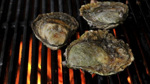 Hot stuff: Angasi oysters.