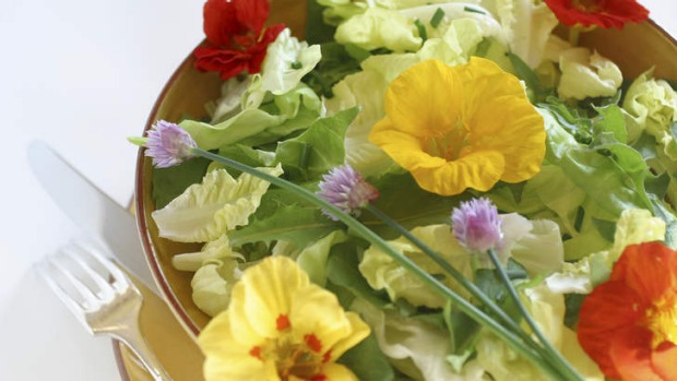 Peppery: Nasturtium flowers and young tender leaves are great for mixed salads.