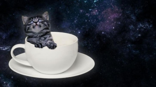 """Artist's impression of a """"kitten catpaccino"""" from Catmosphere Sydney."""