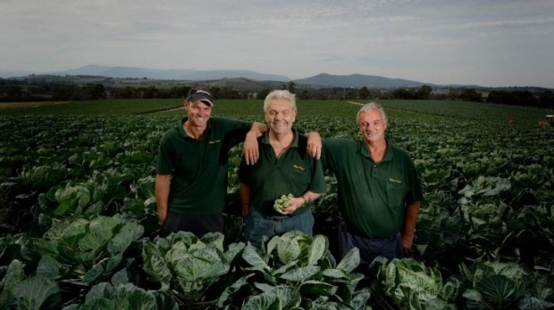 Three generations of the Adams family at their brussels sprout farm in Coldstream. Daniel (left), Ray, (centre) and ...