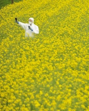 Groups such as Greenpeace take a dim view of GM crops.