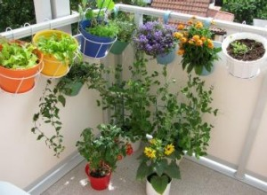 How to grow herbs vegies and flowers on balconies in Canberra