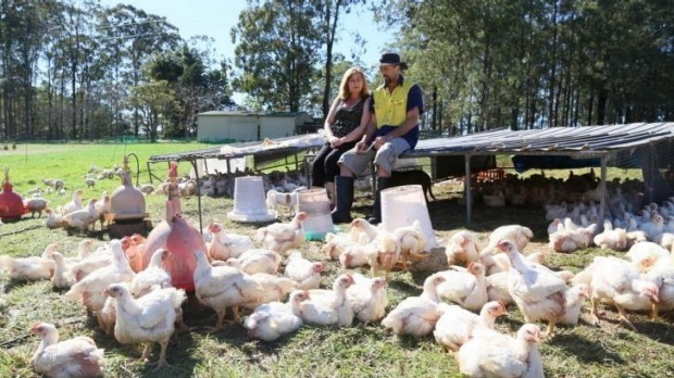 Contented stock: the poultry at Burrawong Gaian Farm are pasture-fed and stress-free.