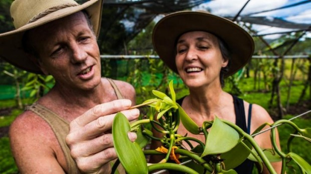Hands-on approach: A brush with nature pollinates beans at Broken Nose Vanilla.