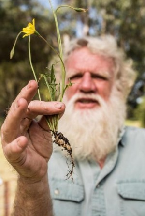 New growth: Bruce Pascoe plans to grow the yam commercially.