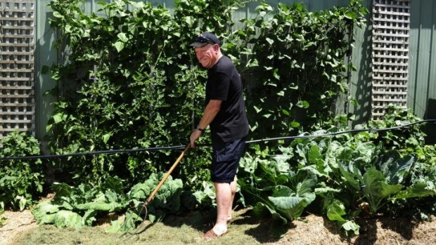 Peter Harris in his vegetable garden in Latham.