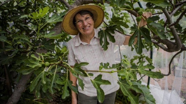 Sally Stephens with her fig tree in her O'Connor garden.