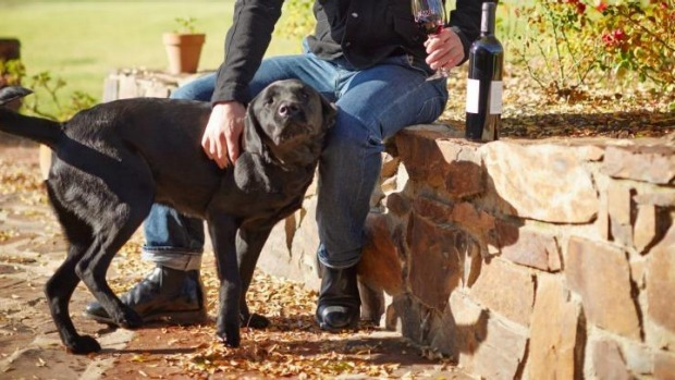 Recognition is long overdue for winery dogs like Norbet at Pizzini Wines.