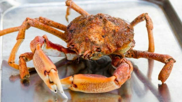 Snow crab will be an ingredient in Redzepi's Sydney kitchen mix.