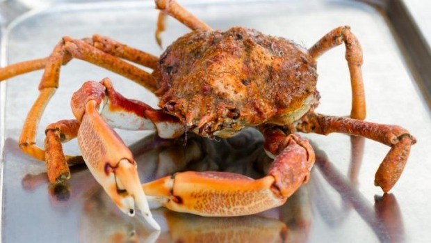 Snow crab will likely be an ingredient in Redzepi's Sydney kitchen mix.