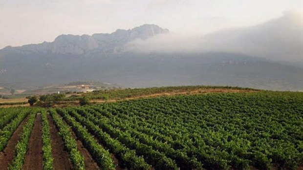 The fog is lifting: Increasingly, producers in the Rioja region are lifting standards.