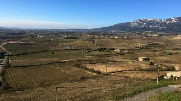 Vines country: Rioja Alavesa in winter is a region of greys and browns.