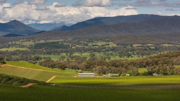 Food with a view: The valley seen from Dal Zotto Wines.