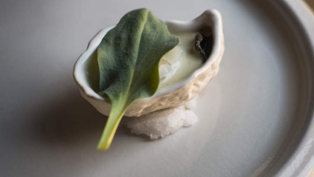 Oyster oyster (oyster and oyster plant).