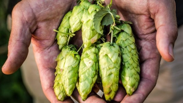 New season hops.