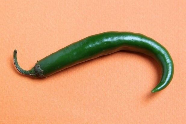 Long chillies can be up to 15 centimetres long and ripen from green to red.