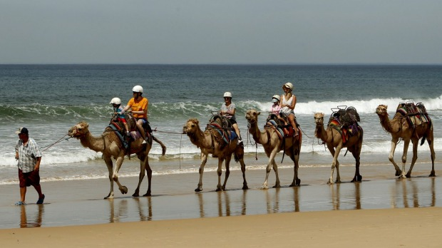 Camel Rides at Birubi Beach.