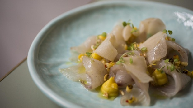 White fish tiradito, pickled jicama and corn textures served at Tequila Mockingbird in Paddington.