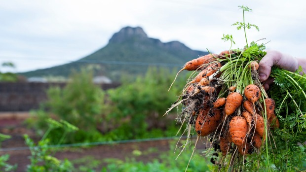 The kitchen garden at Dunkeld's Royal Mail Hotel is bursting with spring produce.