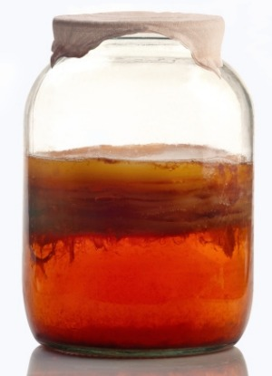 A jar of kombucha during fermentation.