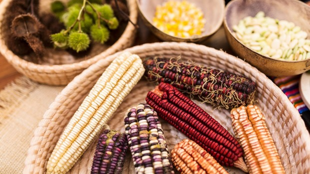 Coulourful corn at Noma's Mexico pop-up.