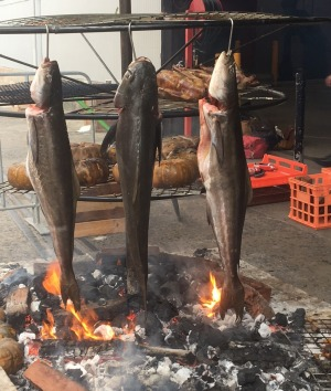 Analiese Gregory cooks cobia at Rootstock, Sydney.