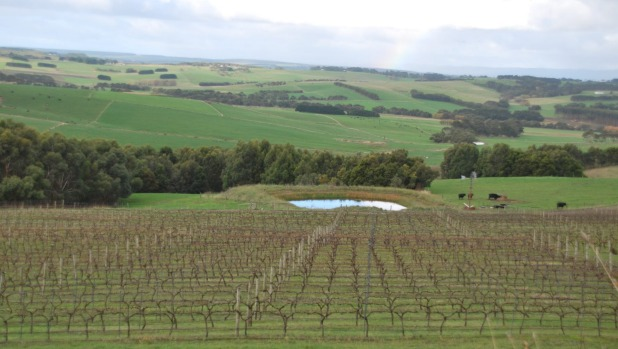 Newtons Ridge Winery, a tiny vineyard in the middle of dairy country.