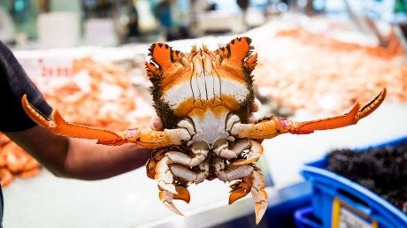A spanner crab waves his salutations at the Sydney Fish Market.