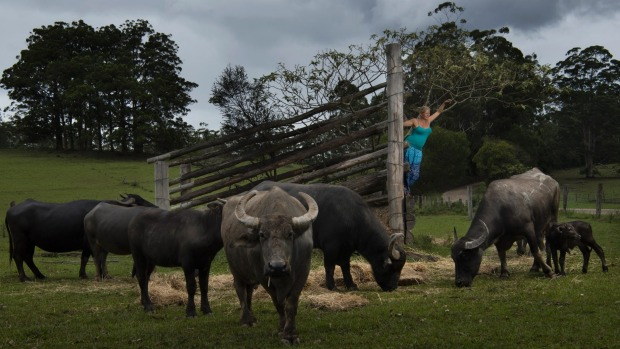 SMH/NEWS. Portrait of Lisa Rothe at the Eungai Creek Buffalo farm in the mid North Coast of NSW. She expecting a baby soon. Photographed for a story by Damien Murphy. Date 10th Feb 2017. Pic by Nic Walker