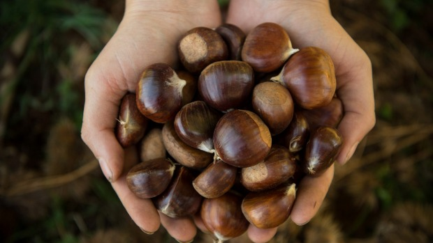 Use your fingernails to remove the skin from chestnuts.