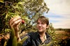 Danish chef Rene Redzepi forages for quandongs on a visit to South Australia.