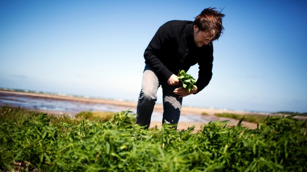 Chef Rene Redzepi, of Noma, started the food foraging trend for high-end restaurants.