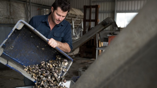 Oyster prices set to rise for Christmas