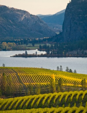 Blue Mountain Vineyard in fall, Okanagan Falls, Canada