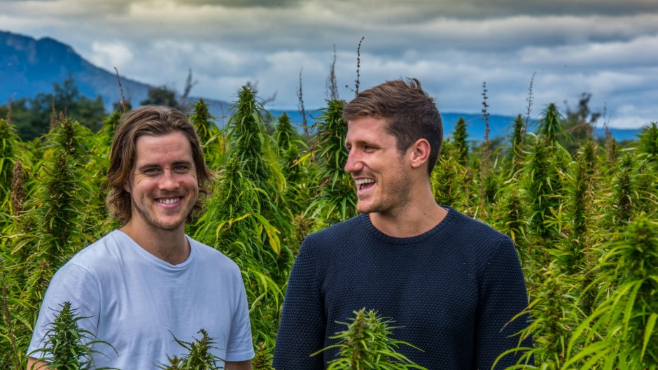Former school chums, now business partners, Nathan McNiece and Tim Crow amid their Tasmanian hemp crop.
