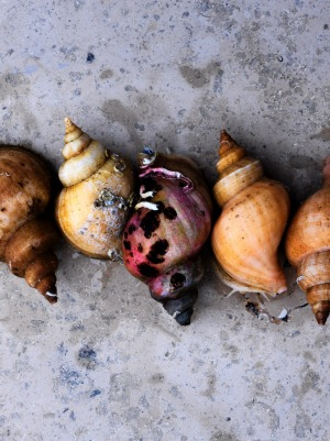 'Seafood season' is the theme for the Noma's opening menu.