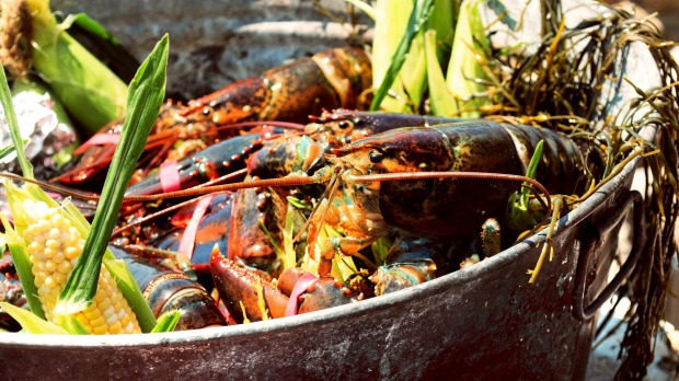 Preparing the lobsters, clams and vegetables for a beachside clam bake.