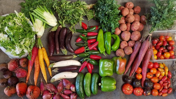 CSA members receive a box of fresh produce from Angelica Organic Farm every week of the season.