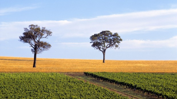 Vineyard's in Western Australia are not suffering as much, having been spared the worst of the weather