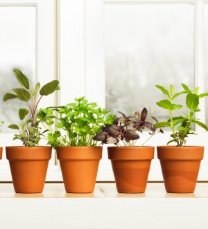 You don't need much space to create a thriving herb garden.