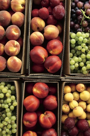 Boxes of roadside fruit for sale near Stanthorpe.