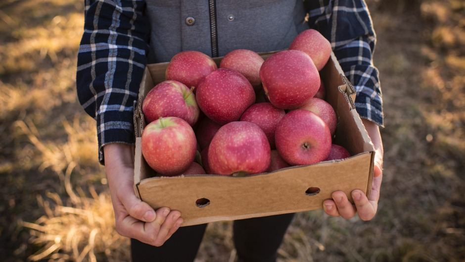 We should expect apples to be sweeter this year.