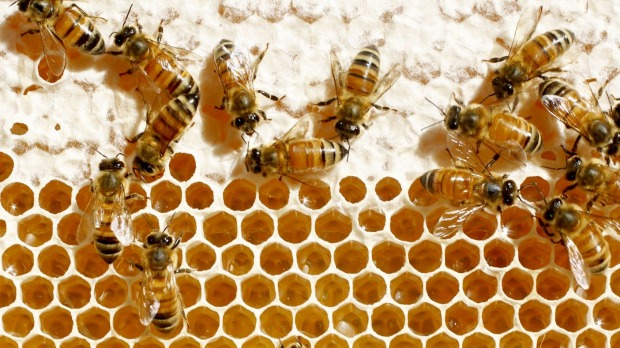 Honey-avoiding vegans believe that exploiting the labor of bees and then harvesting their energy source is immoral.