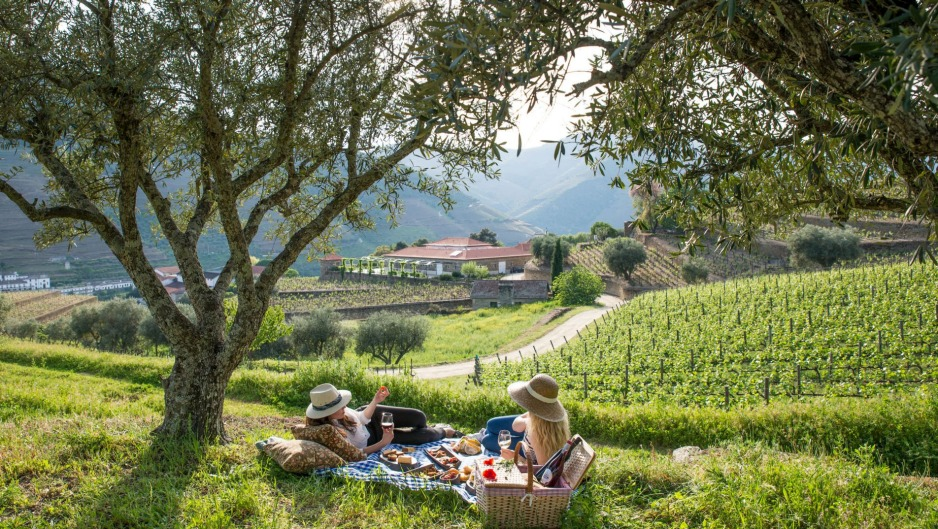 Picnicking among the vines near Pinhao, Portugal.