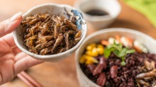 Edible insects and cockroaches are becoming almost mainstream.