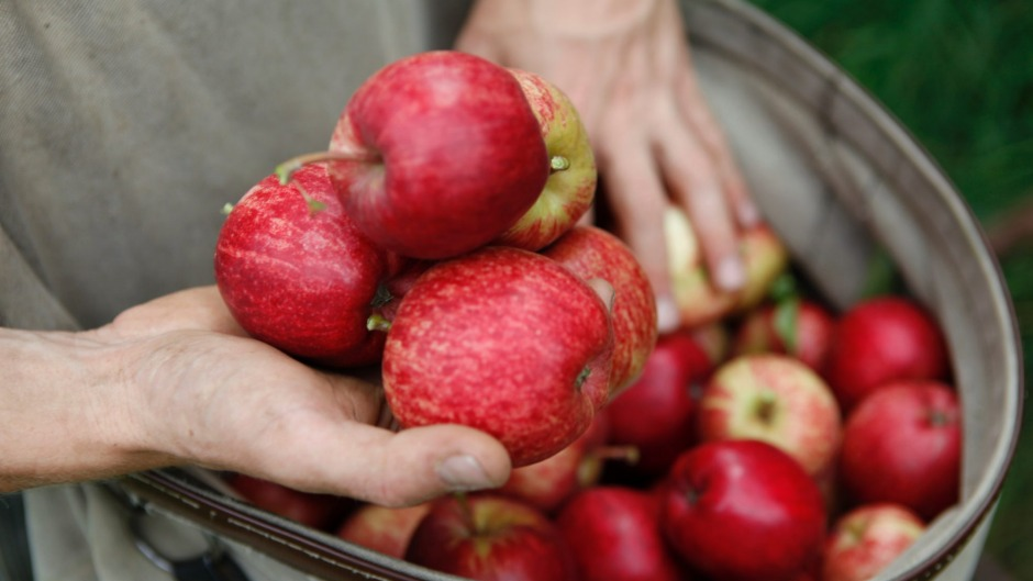 'Most people don't really even think about asking where the fruit in their cider comes from,' says Cider Australia's Sam ...
