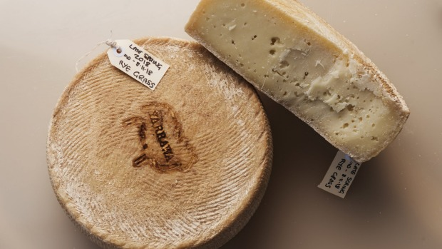 Yarrawa is the first cheese to be made in Australia using uncooked curds and raw milk after changes to food safety ...