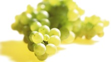 Viognier grapes.      Brian Walsh