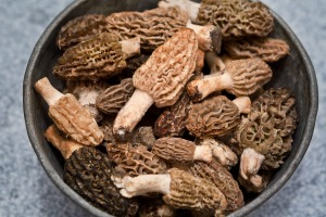 Morchella mushrooms cannot be eaten raw as they contain a powerful toxin, hydrazine.